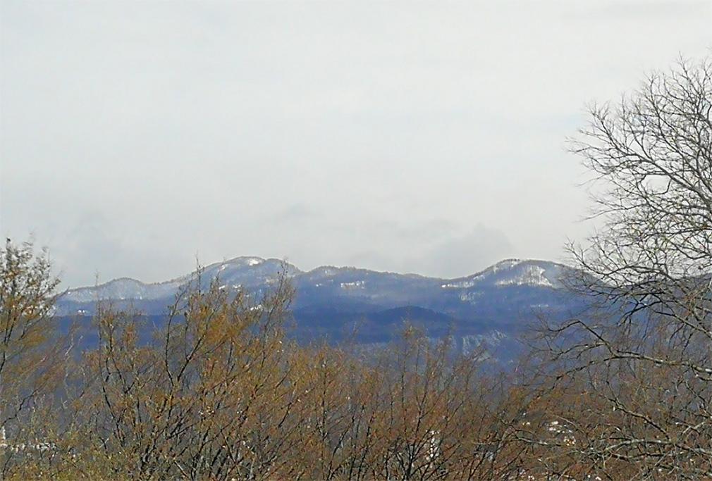 panorama Selva