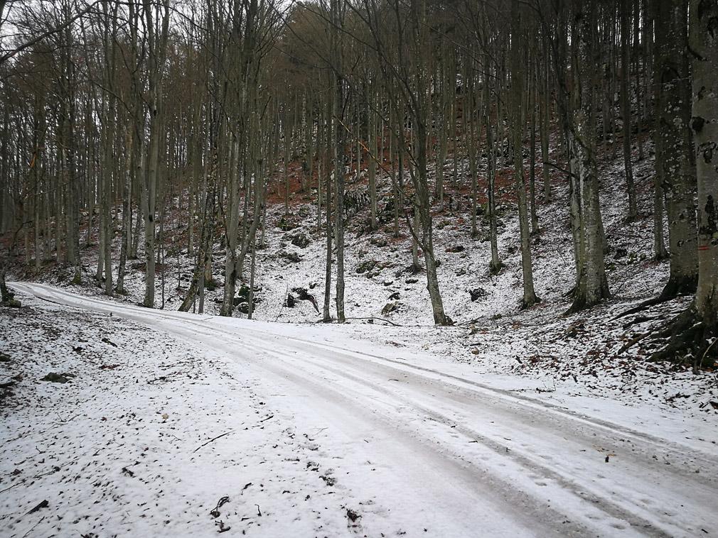 Selva di Tarnova